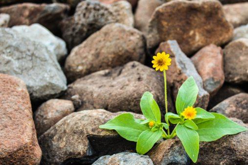 brown-flora-floral-1028930